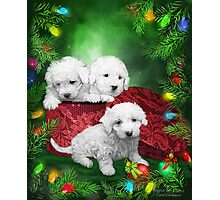 Puppies For Christmas Photographic Print