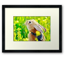 Happy Easter (^_^) Framed Print