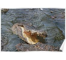 Alligator Action Poster