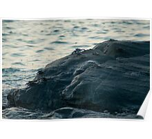 Marine crabs scuttling over rocks Poster