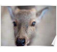 Deer Macro Poster