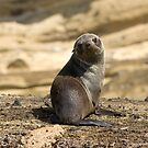 Seal Pup at Cape Bridgewater by Aden Brown