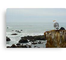 seagull view Canvas Print