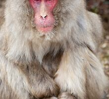 old farther monkey by photoeverywhere