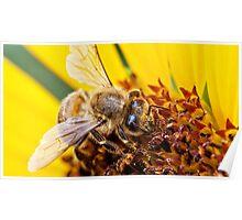 Macro Bee Poster