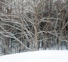 winter woodland scene by photoeverywhere