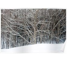 winter woodland scene Poster