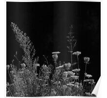 2013 - flora Poster