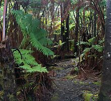 hawaiian rainforest by photoeverywhere