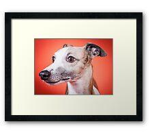 Whippet Portrait Framed Print