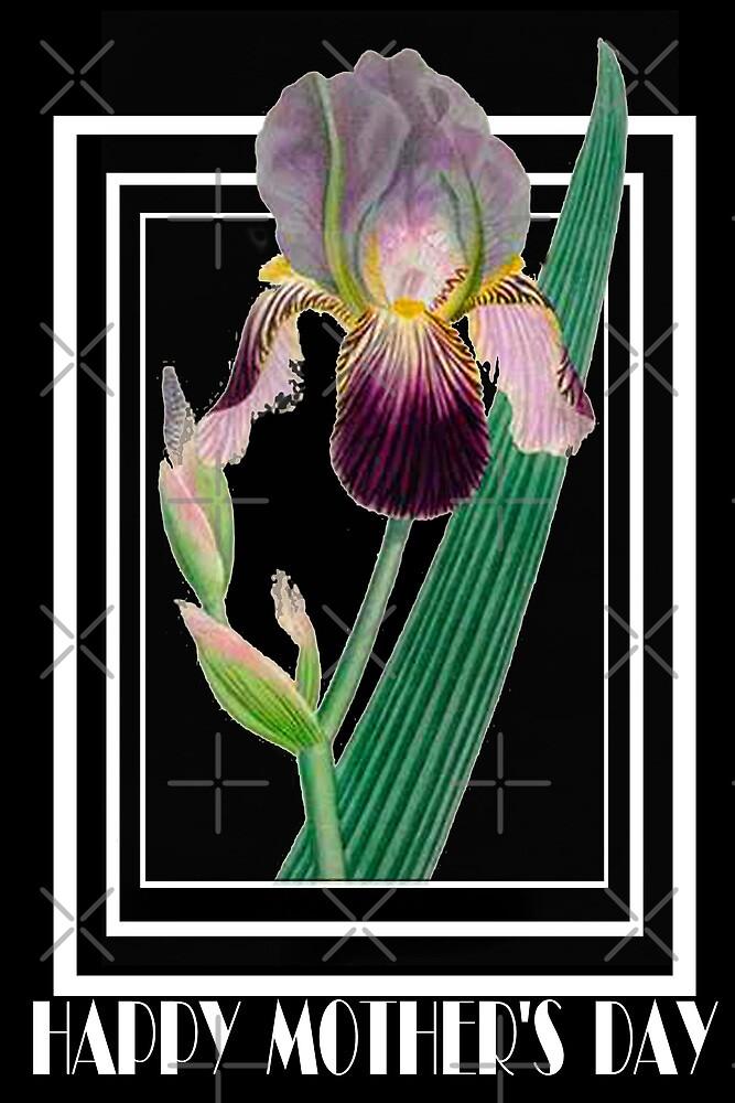 Iris by Catherine Hamilton-Veal  ©