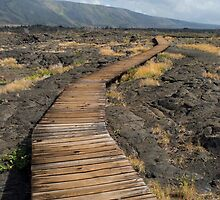 Puu Loa Board Walk by photoeverywhere