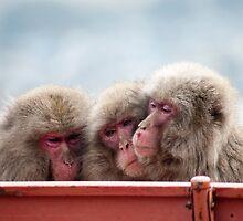 three monkeys by photoeverywhere