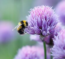 Bumblebee on an Onion Flower by Ruth Ellen Brown