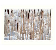 Cattails in snow Art Print