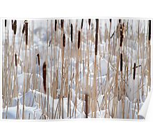 Cattails in snow Poster