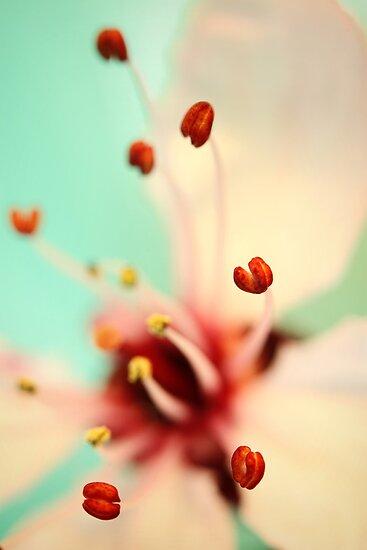 Feeling Spring by Sharon Johnstone