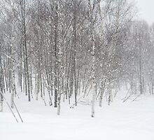winter snowstorm by photoeverywhere