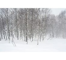 winter snowstorm Photographic Print