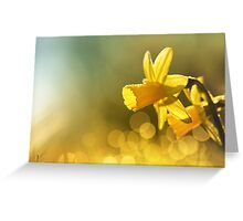 Awakening Daffodils Greeting Card
