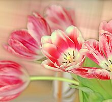 Tulip delicate by RosiLorz