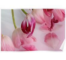 Tulips upside down Poster