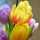 Happy Spring Tulips by walstraasart