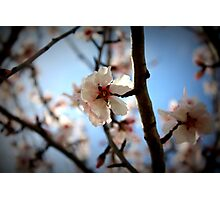 Early Spring Flowers Photographic Print