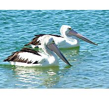 Pelicans at the Gold Coast Broadwater  Photographic Print