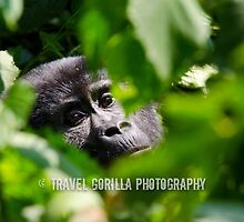 Gorilla in the Leaves by Jessica Henderson