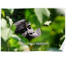 Gorilla in the Leaves Poster