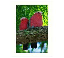 Pretty Pink Galahs Art Print