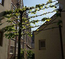 Any Space Can Be a Garden - Creative Urban Gardening From Amsterdam by Georgia Mizuleva