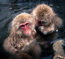Snow Monkeys by LewisHopkins