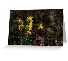 Daffodils Greeting Card
