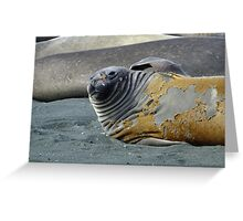 Where's the wrinkle cream? Greeting Card