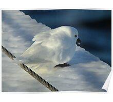 Snow Petrel Poster