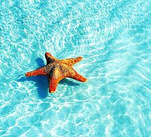Starfish by xox-