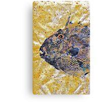 Gyotaku - Triggerfish - Oldwench -  Diptych 1  Canvas Print