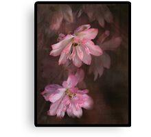 Pink Prose Canvas Print