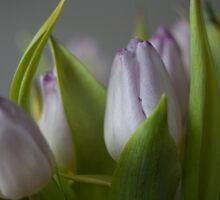 Flower by Kuilboer
