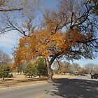 Colorful Fall Tree by AthomSfere