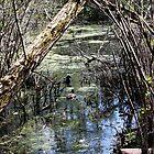 Hidden waterway by Mishcana