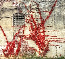 Clinging Vines by bannercgtl10