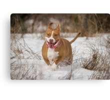 Happy To Be Out Canvas Print
