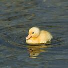Yellow Duckling by Sue Robinson