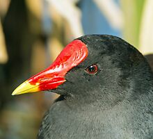 Moorhen Head Detail by Sue Robinson