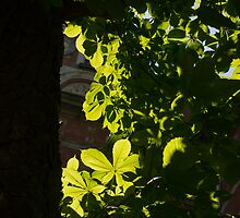 Spotlight on Spring Green by Georgia Mizuleva