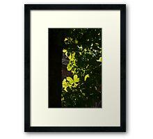 Spotlight on Spring Green Framed Print