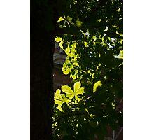 Spotlight on Spring Green Photographic Print